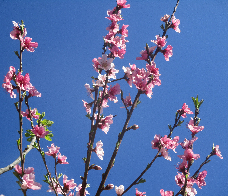 blossom 022