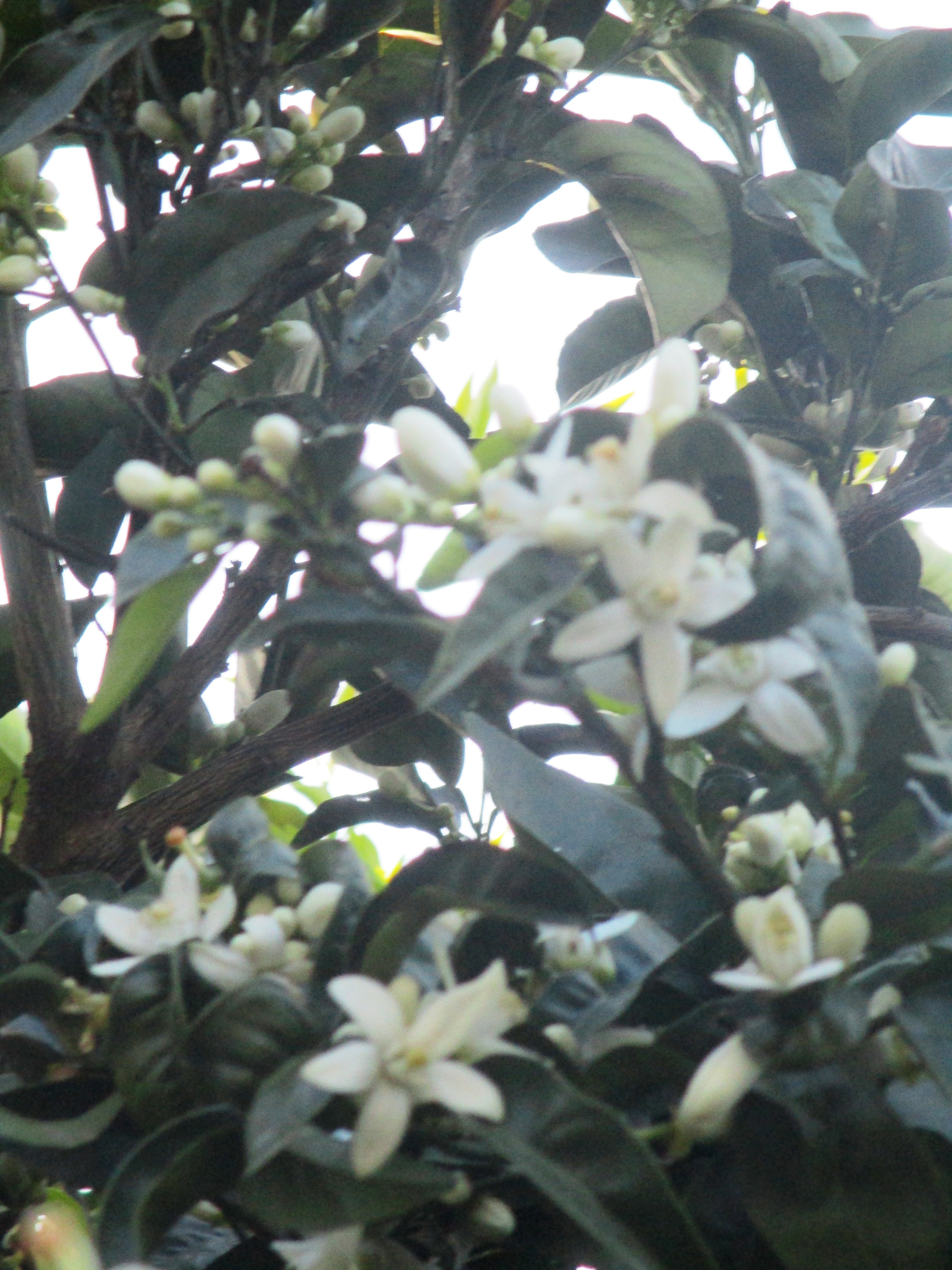 jam & orange blossom 046